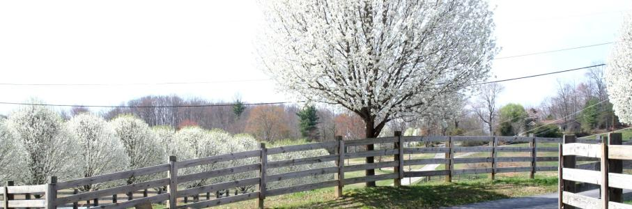 Spring In Scott County - Helenwood.jpg