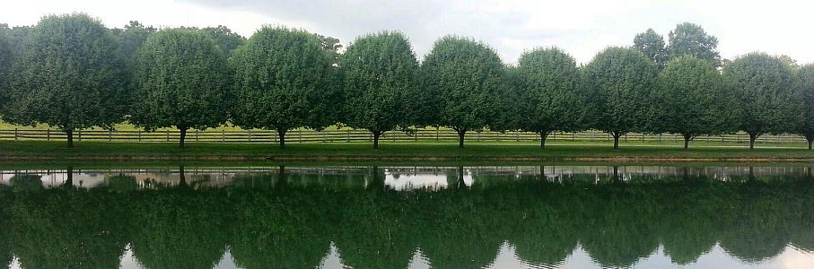 Summer In Scott County - Reflection of Trees .jpg